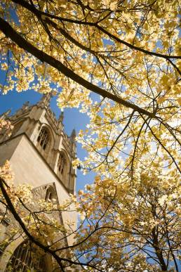View through autumn trees at Merton College, Oxford