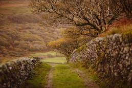Remote path in Wales with autumnal colours