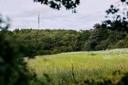 View across meadow of Beckley Tower from Sydlings Copse