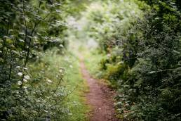 Footpath through Sydlings Copse