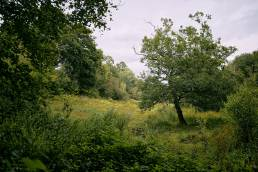 View from the woods at Sydlings Copse