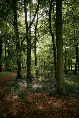 Woods at Sydlings Copse